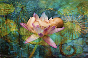 Healing Metal Prints - Baby Lotus Dreams Metal Print by MiMi Milagros Photography