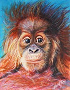 Orangutan Framed Prints - Baby Orangutan Framed Print by Shirl Theis