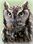 Barn Pen And Ink Photo Posters - Baby Owl Eyes Poster by Athena Mckinzie