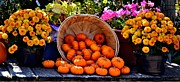 Tara Potts - Baby Pumpkins and...