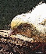 Fresh Pastels - Baby Quail in Pastel by George Pedro