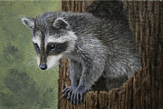 Raccoon Painting Posters - Baby Raccoon Poster by Crista Forest