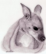 Kangaroo Drawings - Baby Roo by Wendy Brunell