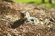 David Schoenheit - Baby Squirrel
