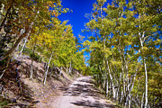 Autumn Landscape Art - Back Country Road Take Me Home Colorado by James Bo Insogna