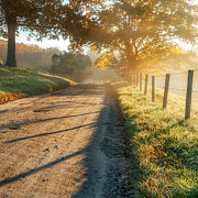 Dirt Roads Photos - Back Road Morning Square by Bill  Wakeley