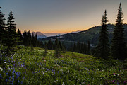 Rainier Prints - Back to Paradise Print by Mike Reid