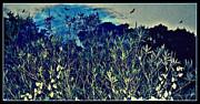 YoMamaBird Rhonda - Back Yard Sky