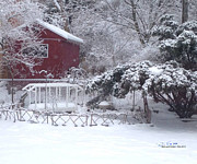 Steph Maxson - Back Yard Winter
