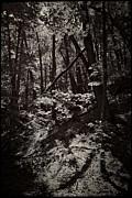 Michelle Calkins - Backdunes on the Livingston Trail