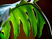 Frond Framed Prints - Backlit Frond Framed Print by Al Bourassa