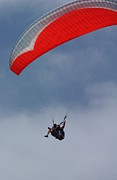 Beach Scenes Photos - Backlit Paragliders from Below - Torrey Pines by Anna Lisa Yoder