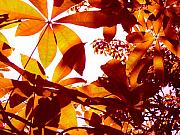 Library Digital Art - Backlit Tree Leaves 2 by Amy Vangsgard