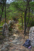 Barbara Bowen - Backpack resting along the trail