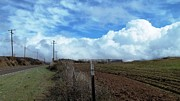 Fences Prints - Backroads- Telephone Poles- And Barbed Wire Fences Print by Glenn McCarthy Art and Photography
