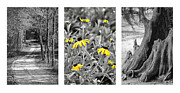 Rudbeckia Hirta Framed Prints - Backwoods Escape Triptych Framed Print by Carolyn Marshall