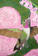 Hummingbird Pastels - Backyard Bandit by D Joseph Aho