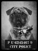 Mug Shot Posters - Bad Dog Poster by Edward Fielding