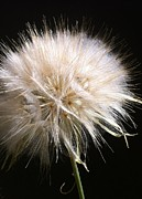 Stephanie Aarons Photo Metal Prints - Bad Hair Day Metal Print by Stephanie Aarons
