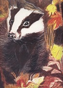 Fauna Pastels Metal Prints - Badger in the fall. Metal Print by Ann Fellows