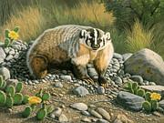 Badger   Print by Paul Krapf
