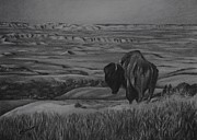 Dakota Drawings - Badlands Bison by Jered Klodt