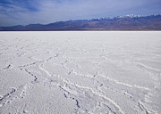 Dry Lake Photos - Badwater - Death Valley by B Christopher
