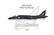 Squadron Prints Posters - BAE Systems FRS1 Sea Harrier Poster by Arthur Eggers