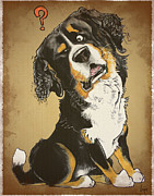 Mountain Drawings Framed Prints - Baffled Bernese Mountain Dog Framed Print by Canine Caricatures By John LaFree