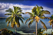 Ellen Lacey Prints - Bahia Honda Print by Ellen Lacey