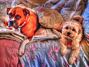 Bed Quilts Photos - Bailey and Jasmine by Barry Jones