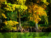 Cypress Trees Digital Art Posters - Bald Cypress 2 - Digital Effect Poster by Debbie Portwood