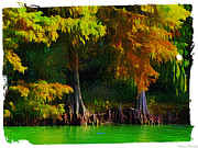 Cypress Trees Digital Art Posters - Bald Cypress 3 - Digital effect Poster by Debbie Portwood