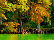Cypress Trees Digital Art Posters - Bald Cypress 4 - Digital effect Poster by Debbie Portwood