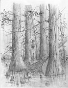 Knees Originals - Bald Cypress by Jim Hubbard