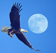 Raymond Salani III - Bald Eagle and Full Moon