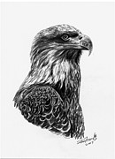 Eagle Drawing Drawings Originals - Bald Eagle  Bird of Prey by Sheri Marean