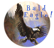 Bald Eagle Pastels Metal Prints - Bald Eagle Metal Print by Brooks Garten Hauschild
