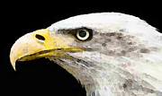 Patriotic Paintings - Bald Eagle by Sharon Cummings by Sharon Cummings