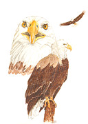Catherine Basten - Bald Eagle