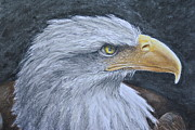 Drawing Of Eagle Drawings - Bald Eagle Head by Rich Alexander