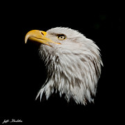Jeff Goulden - Bald Eagle Looking...