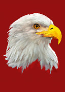 Bob Johnston - Bald Eagle Painting
