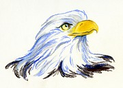 Eagle Pastels Prints - Bald Eagle Portrait Print by MM Anderson
