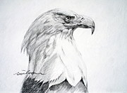 Eagle Drawing Drawings Originals - Bald Eagle by Ron Wilson