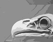 Gray And Black Beak Posters - Bald Eagle Skull Poster by Brooke Ryan