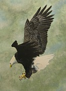 Stan Tenney - Bald Eagle