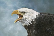 Ralph N Murray III - Bald Eagle Study #1
