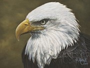 Ralph N Murray III - Bald Eagle Study #2
