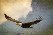 Bald Eagle Print by Tracy Munson